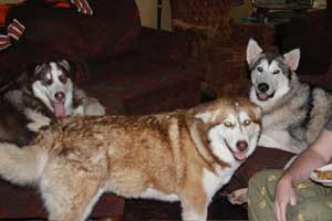 Hudsons Malamutes - Gumbo and Beignet and Mia